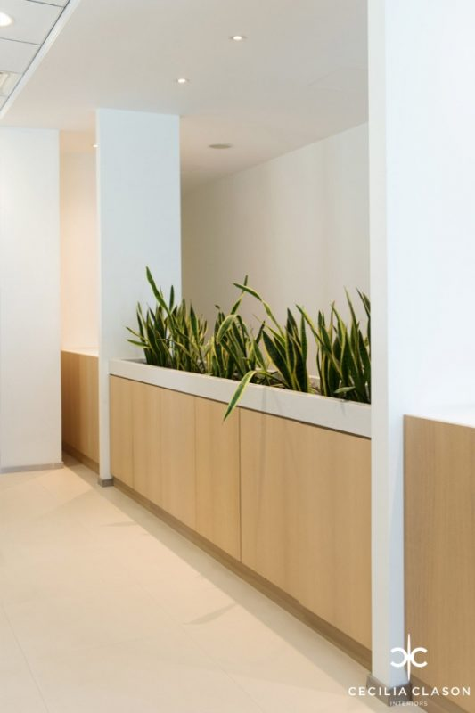 Office Interior Design - Light wood cabinet planter boxes containing snake plants, in-between two white pillars